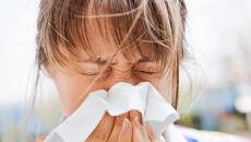 Alergicy: uważajcie na pyłki olszy. Wysokie stężenie w całym kraju