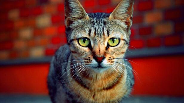 Wyrzucił kota przez okno (zdjęcie ilustracyjne) bjimmy934 / Flickr (CC BY 2.0)